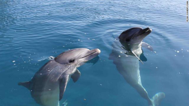 "El entrenador de ""Liberen a Willy"" ayuda a delfines en cautiverio a regresar a su hábitat"