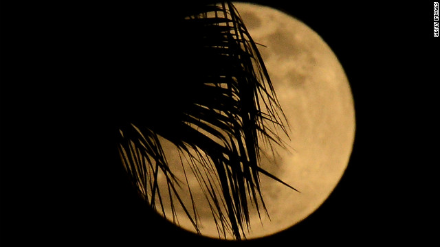 A palm tree is silhouetted in front of the moon in Los Angeles, California.