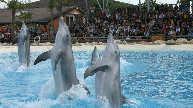 Report: Dolphins died of drug overdose after rave