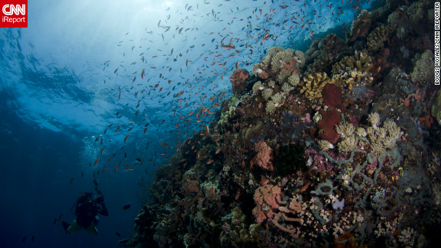 "The Philippines is part of the Coral Triangle, a hub of marine biodiversity in Southeast Asia spanning 6 million square kilometers. The Verde Island passage is a popular diving spot, with one of the world's largest concentrations of coral and other endangered marine species. Unfortunately, it is a victim of overfishing, pollution, and urban development. iReporter Boogs Rosales hopes that by sharing his beautiful photos, he can ""help [Filipinos] care about the environment more and realize what we have to lose if we don't protect it."""