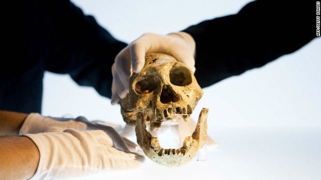 At 1.8 million years old, the Dmanisi skull is the oldest example of a hominin skull found outside Africa. It was discovered in 1983 in the medieval city of Dmanisi, which was settled during the Bronze Age.