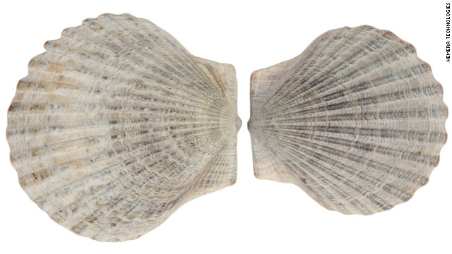 National coquilles St. Jacques Day