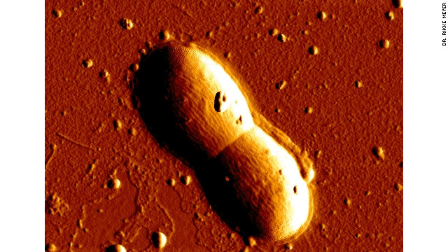 Bacteria 'good bet' for alien life