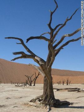 The dead acacia, or &quot;camel thorn,&quot; trees are said to be as old as 900 years.