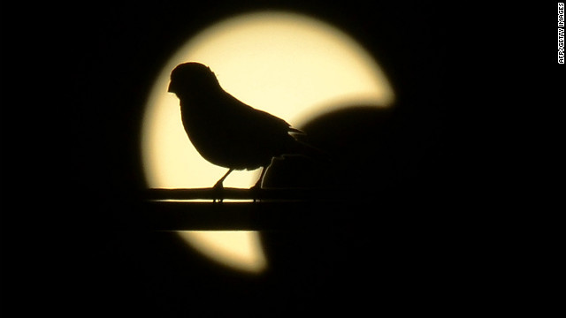 A small bird rests on a powerline in front of the solar eclipse in Los Angeles, California.
