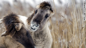 Pony bringing together Europe's nature reserves