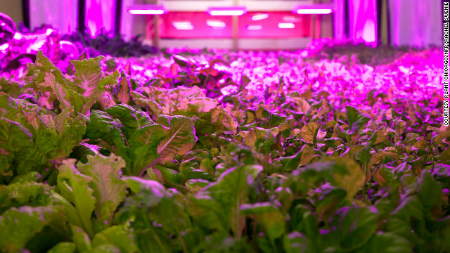 "The Plant is a project that has taken over an 85-year-old meatpacking building to create a ""vertical farm"" on Chicago's South Side."