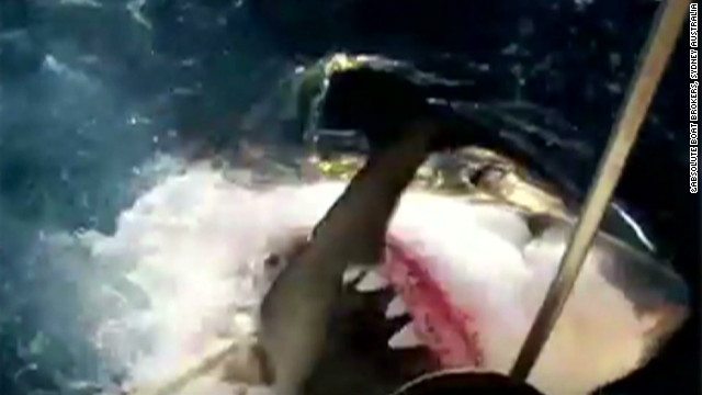 Gotta Watch: Up-close shark encounters