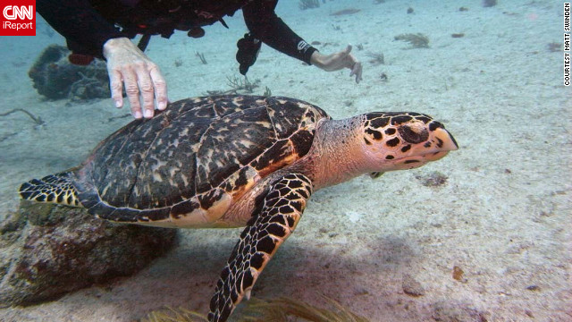 A diver bonds with a sea turtle off the coast of Playa del Carmen, Mexico.
