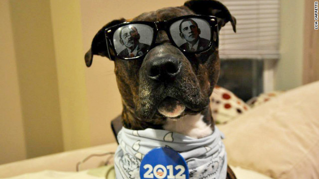 Rocco Giovani Meatball Capretto's owner Lisa Capretto says this picture of her dog is her effort at campaigning.
