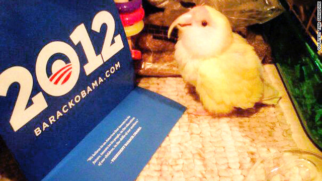 "Tina Gangidine says her pet lovebird, The Bird, H.R.H. (Her Royal Highness), is a ""political bird."""