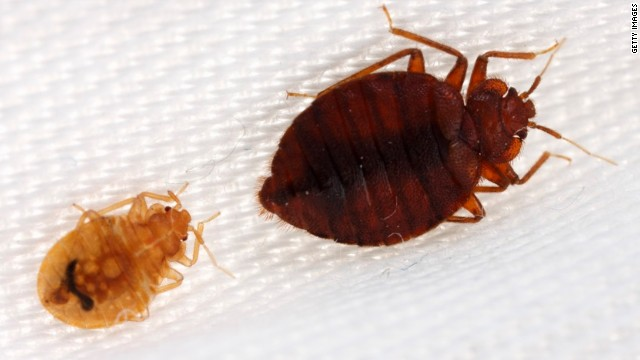 Study: Bed bug 'bombs' don't work