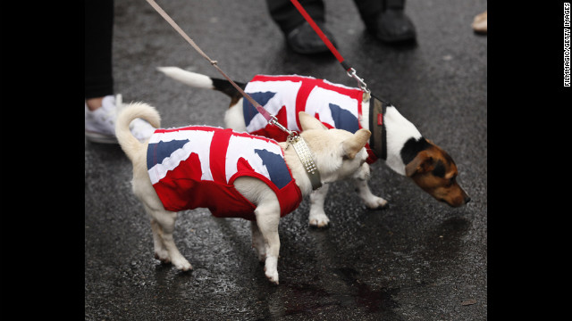 Two small dogs show their support of the Queen.