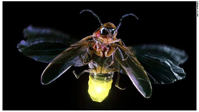 Bioluminiscencia o los seres que brillan con luz propia