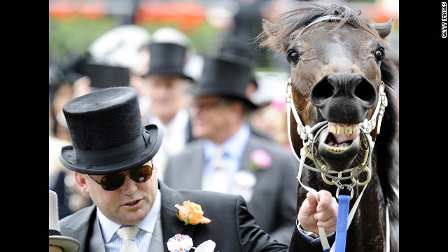 Racehorse Black Caviar neighs after carrying his rider across the finish line for the win on Saturday.