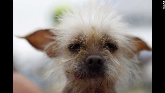 Photos: World\'s Ugliest Dog Contest