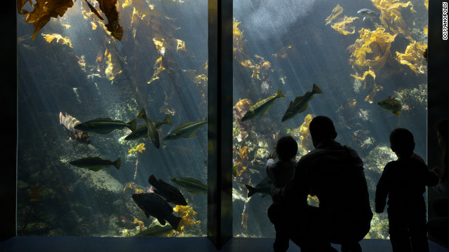 "The aquariums at Oceanopolis are divided into different zones; tropical, polar, temperate, biodiversity and ""the abyss"". In each zone visitors can learn about the ecosystems of different marine climates."