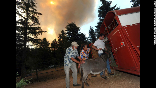 Greg and Karen Bodine help her father, Duane Schormann, left, load his animals into a trailer near Colorado Springs as they evacuate the area Sunday.