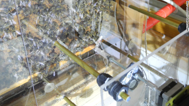Berlin is abuzz with mechanical 'robot' bees