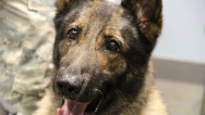 Military dogs classified as 'equipment'