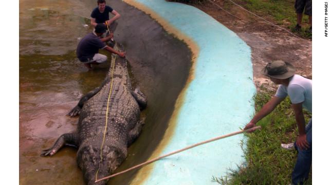 """""""Lolong"""", el cocodrilo más grande del mundo mide 6 metros y pesa una tonelada"""