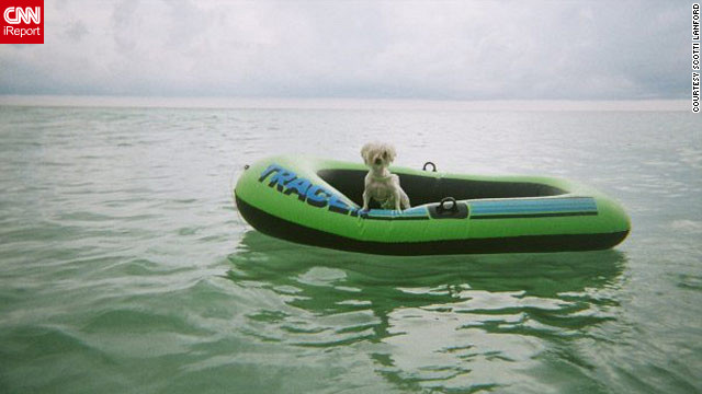 Flossy, a 5-year-old Maltese, captains a boat raft off the shores of Destin, Florida. 