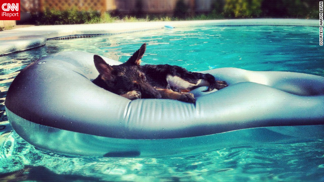 Four-month-old German shepherd Zhik naps on a float in his family's pool in Tulsa, Oklahoma.