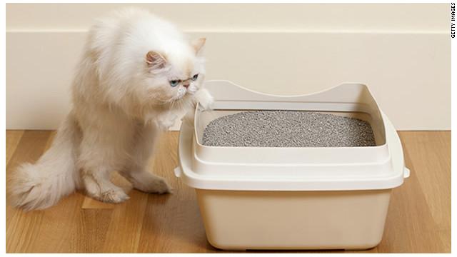 La caja de arena del gato ¿aumenta el riesgo de suicidio?