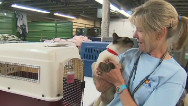 Wildfire pets wait to be reunited with owners