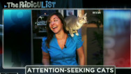 The RidicuList: Attention seeking cats