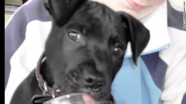 El perro Lennox fue ejecutado pese a las súplicas por su liberación