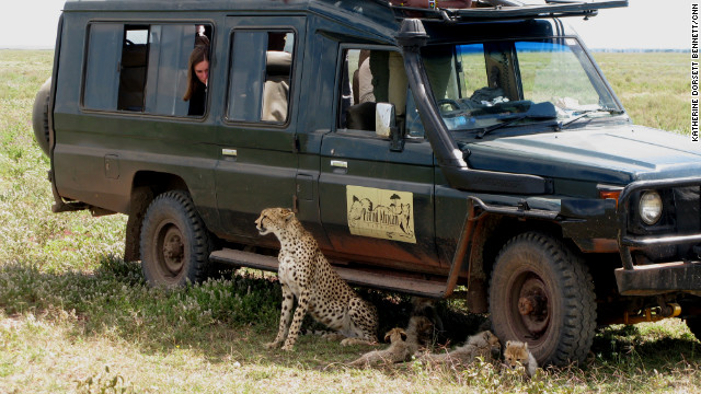 It's possible for tourists to get very close to some animals on a Tanzanian safari.