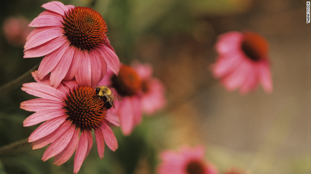 Thanks for making beautiful summer flowers possible, bees, but we're not so grateful for your throbbing, itching sting.If you've had an unfriendly encounter with a hornet, wasp or bee, try making a simple paste out of baking soda and water. Spread the paste on the sting to soothe it.&lt;br/&gt;&lt;br/&gt;