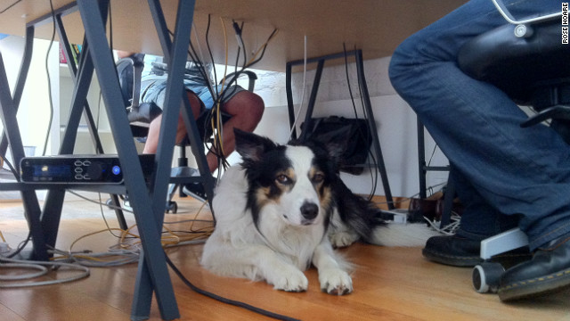 Rabobi, a border collie who accompanies his owner to work at a web development agency in East London, takes himself for walks.