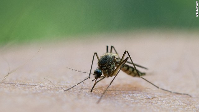 2012 saw the second-worst outbreak ever for West Nile Virus, with 5,387 cases and 243 deaths, according to the Centers for Disease Control and Prevention's last update of the year. The worst-ever outbreak was in 2003, when 9,862 illnesses and 264 deaths were reported.