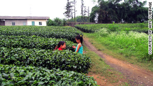June Cubbage-Troop visiting a Chinese tea farm near the orphanage where she spent the first two years of her life.
