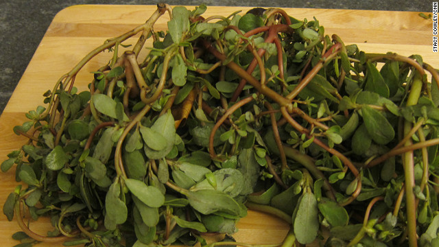 CSI: CSA - purslane, the noxious weed that makes a tasty salad
