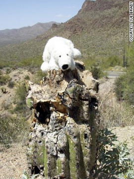 Bear accompanies California resident Sue Brady on her travels. Bear might be a little out of his element in the Arizona desert.