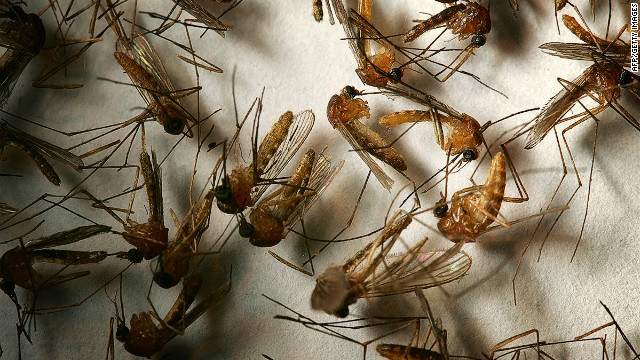Day biting mosquitoes can spread a disease called dengue fever, otherwise known as
