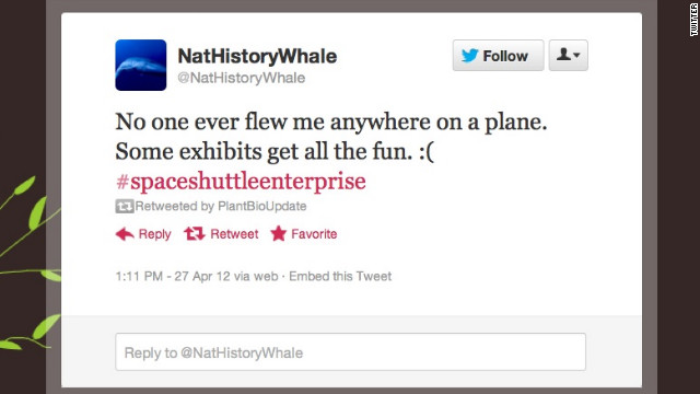 What's it like to witness everything and interact with nothing? <a href='https://twitter.com/NatHistoryWhale' target='_blank'>@NatHistoryWhale</a> knows. This lonely icon, hanging in New York's Natural History Museum, comments on current events from its solitary post. Thankfully, it has plenty of digital company. Followers: 14,756