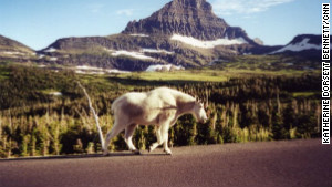 Glacier National Park is home to more than 60 species of mammals including mountain goats.