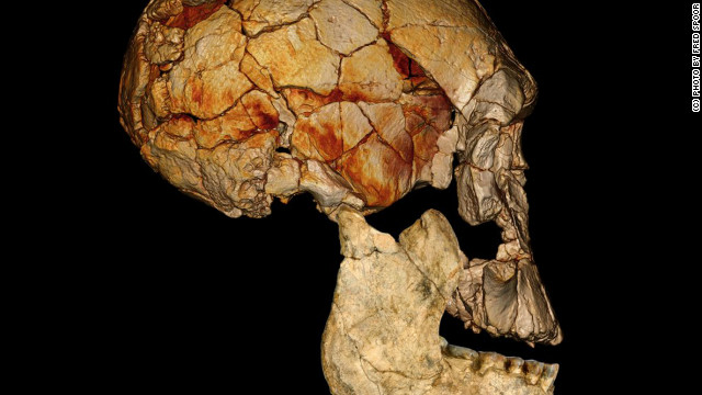 Fossils complicate human ancestor search