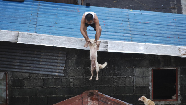 A Manila resident pulls his dog to a rooftop refuge. More than 800,000 people in and around the Philippines capital battle deadly floods as more rain falls, with neck-deep waters trapping both slum dwellers and the wealthy elite on rooftops.