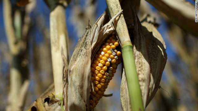 U.S. drought drives up food prices worldwide