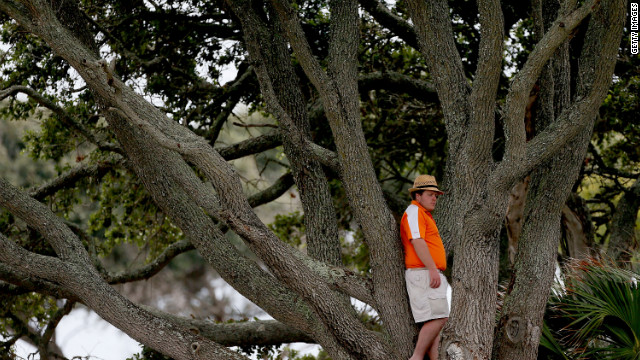  A spectator watches the players from a tree.