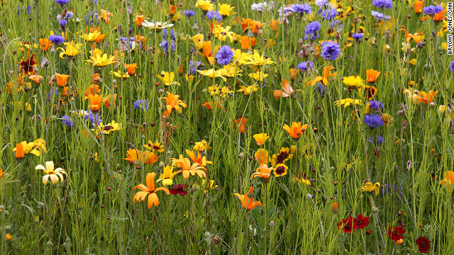 After years of hard work, the contaminated land has been cleaned up and planted with wildflowers all the colors of the rainbow.