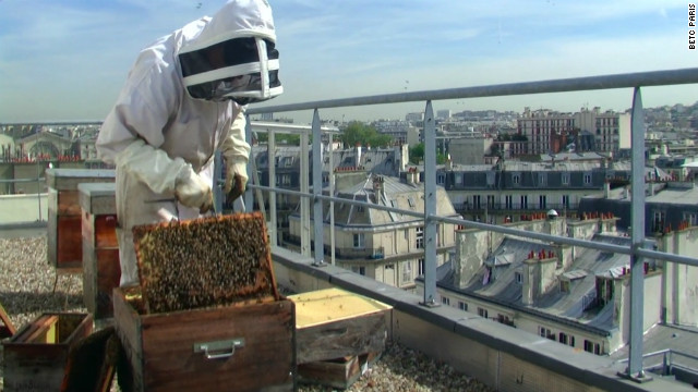 At Erra's agency BETC, they keep bees on a rooftop terrace. Erra, who has a Masters in Literature from the Sorbonne, says working in advertising is like studying literature. &quot;It's the chance to understand people, and how to create something which can move people.&quot;