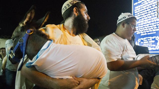 Burros «Wi-Fi» para los turistas en Israel