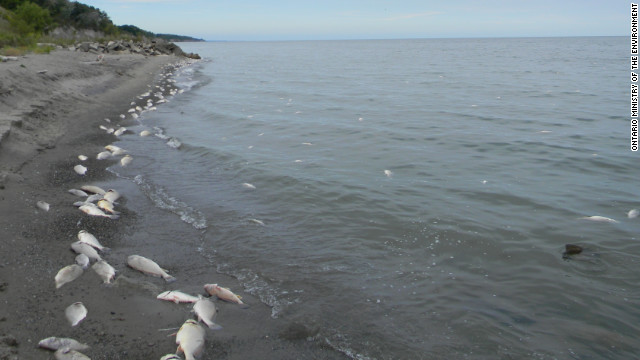 tens of thousands of dead fish stink up lake erie shore