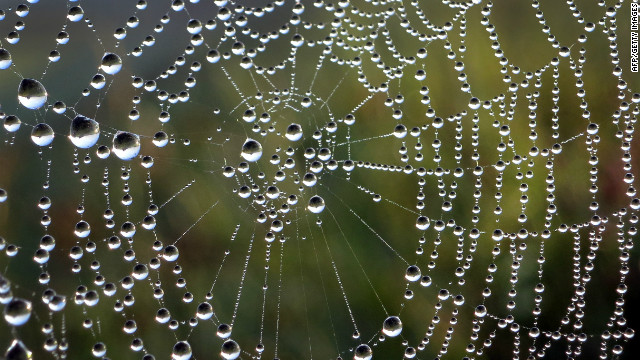 A spider's net is covered in dewdrops on September 4 in Duesseldorf, Germany.